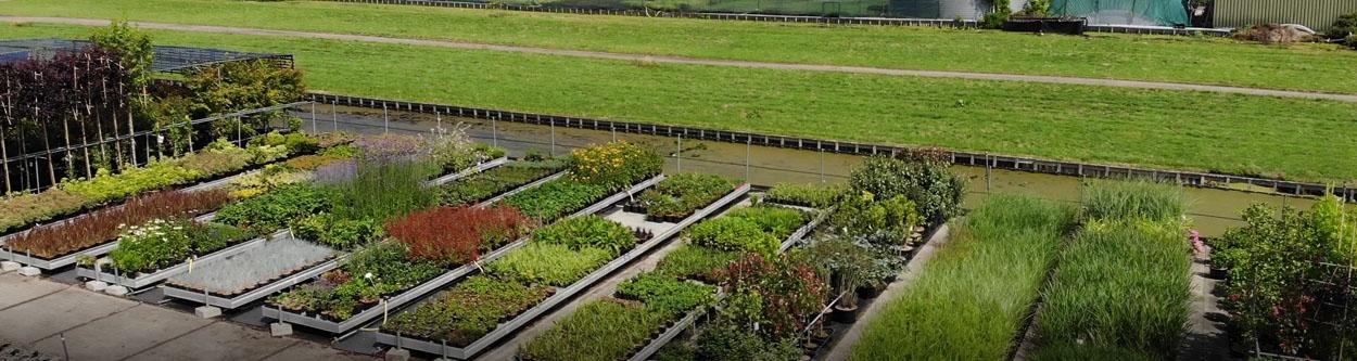 Handelskwekerij_in_Boskoop_Tafels_met_vaste_planten