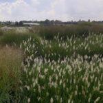Kwekerij_grassen